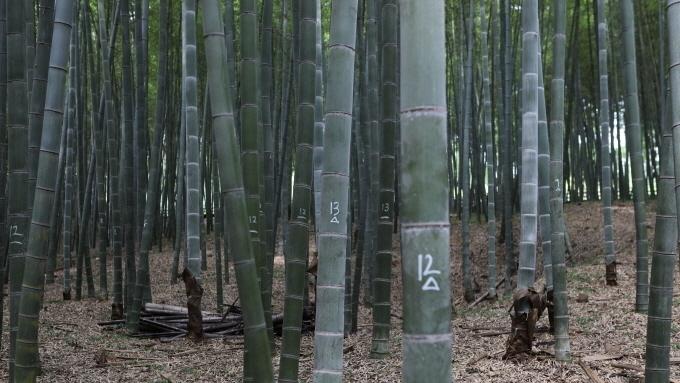 대나무도 목재펠릿 제조원료 포함